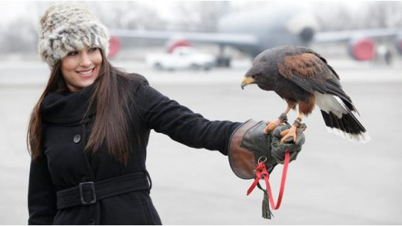 The Falcon's are used to deter other birds from flying into the engines of airplanes.