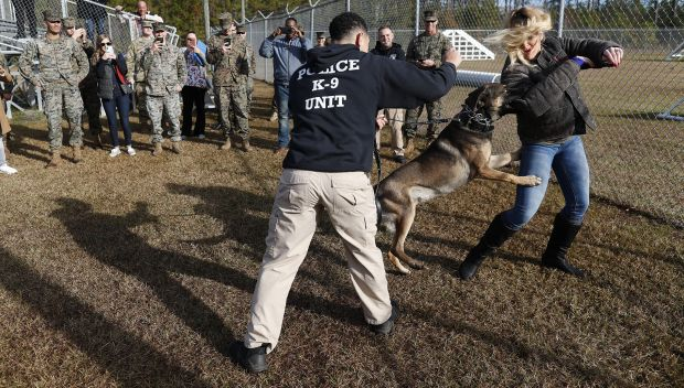 WWE Superstars train with Marine K-9 unit: photos